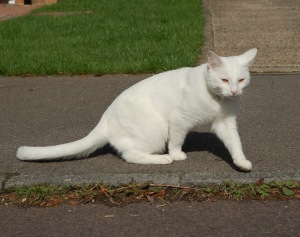 White cat on kerb